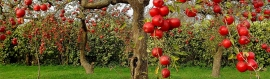 red-apple-fruit-tree-and-grass-web-header
