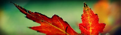 red-leeves-wordpress-header