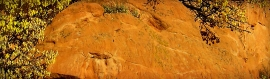 growing-plants-on-sandstone-rocks-bg-header