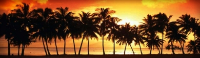 palms-sunset-web-header-01
