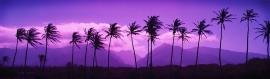 sunset-beauty-website-header