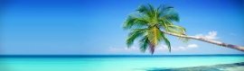 blue-water-coast-and-tropical-tree-web-header