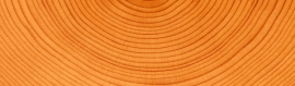 tree-wood-circles-background-header